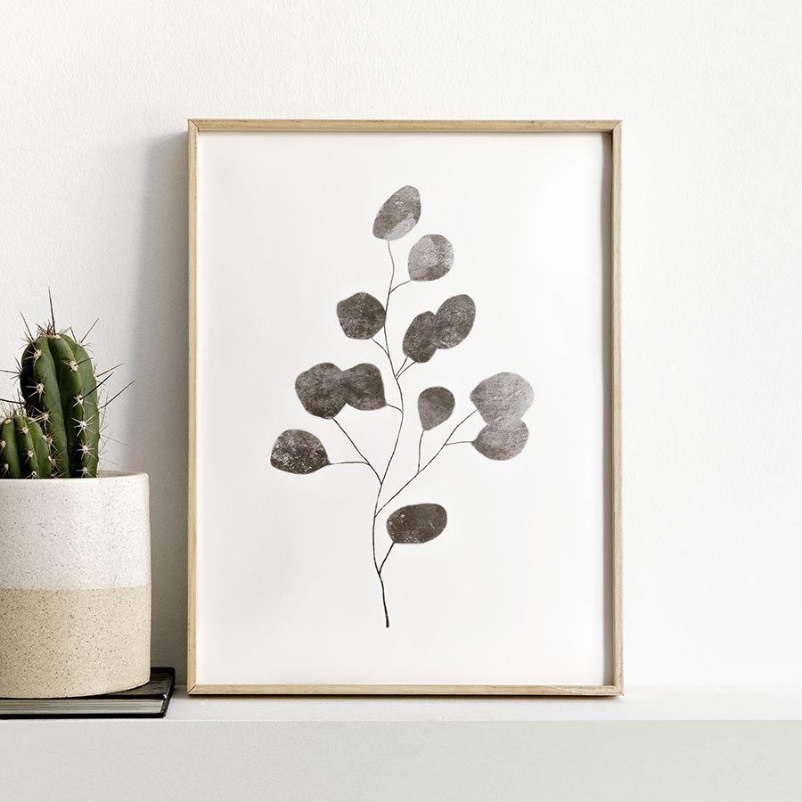 Liptus lámina