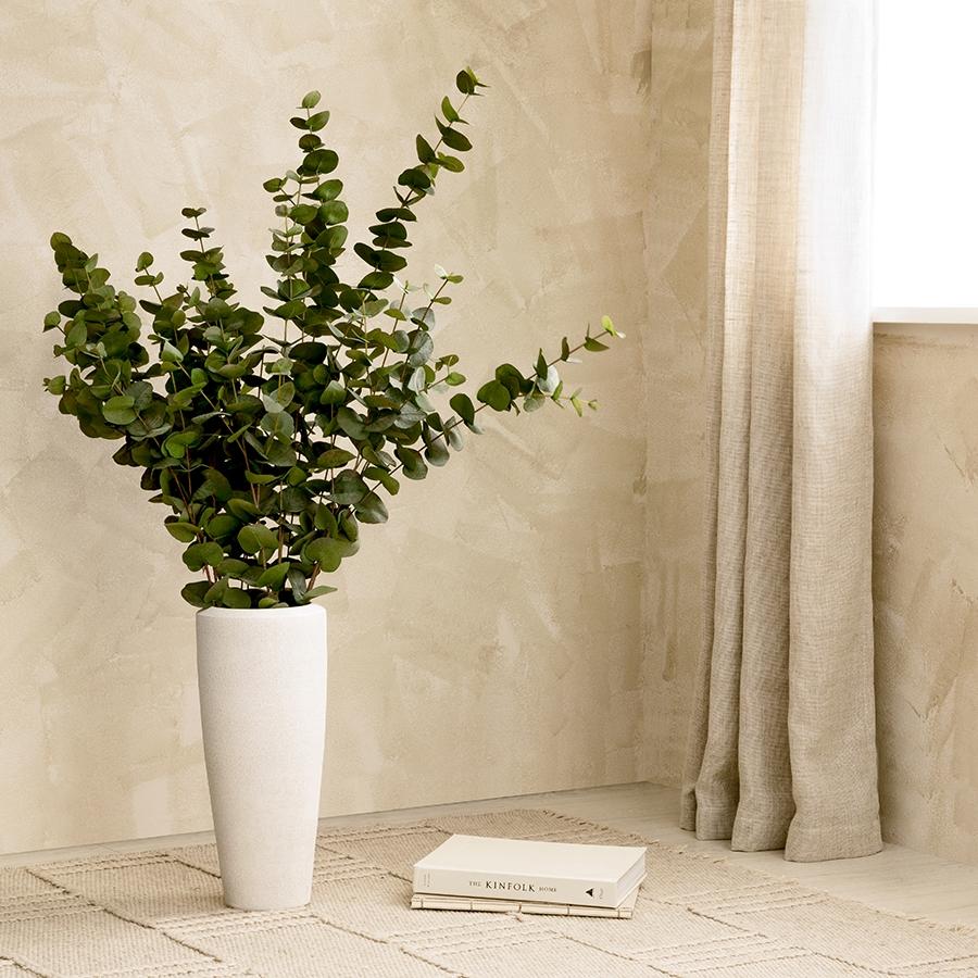 Eucalyptus royal 120